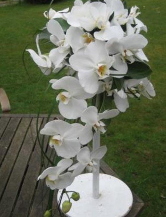 Lakewood Florist - Florists - 9603 Bridgeport Way SW, Lakewood, WA ...