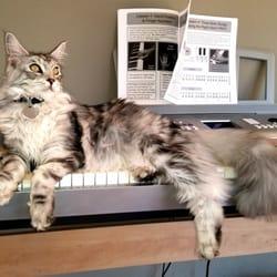 Avistacats Maine Coon Kittens - CLOSED - (New) 32 Photos