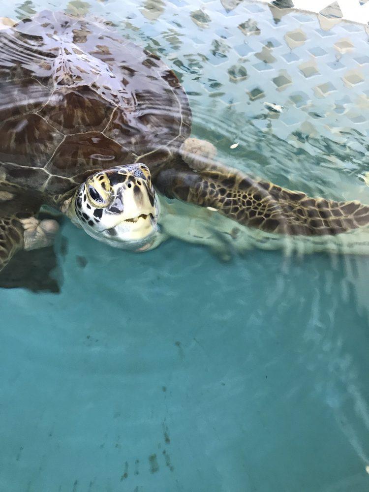 The Sea Turtle Hospital: 9505 N Ocean Shore Blvd, St Augustine, FL