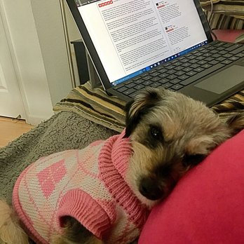 Photo of Lost Pet Tracker - Murrieta, CA, United States. A happy BabyGirl, safe at home, snuggled up with the Baby Bump, while I write my 5 star review for Lost Pet Tracker.