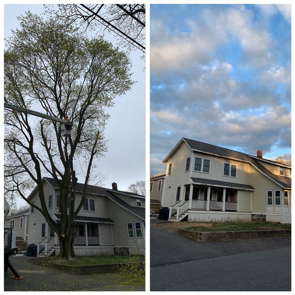 PS Tree Service: Holbrook, MA
