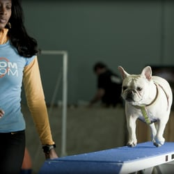 Zoom Room Dog Training Closed 53 Photos Amp 25 Reviews