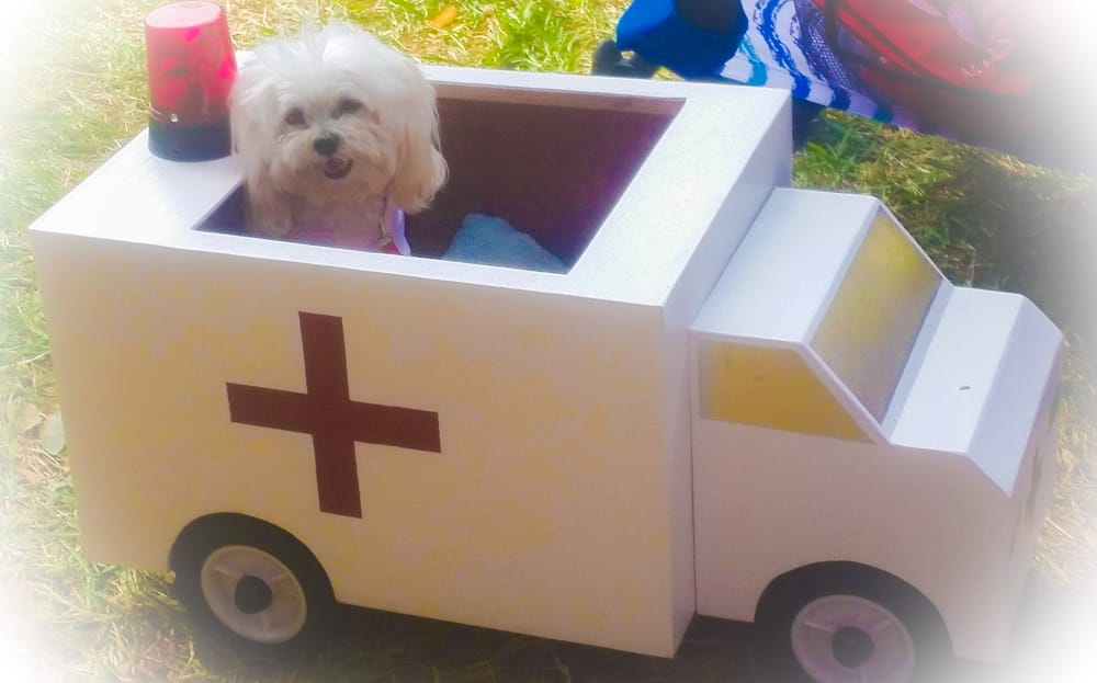 Photo of Dogtoberfest - Dunedin FL United States. Dog in an ambulance. & Dog in an ambulance. They had a costume contest. She had 3 or 4 ...