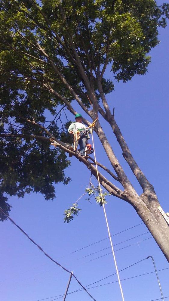 JBS Professional Tree Care: Algonquin, IL