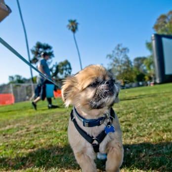 Mobile Dog Grooming Santa Monica