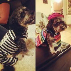 Carols dog grooming 10 photos 26 reviews pet stores 973 photo of carols dog grooming chico ca united states solutioingenieria Gallery