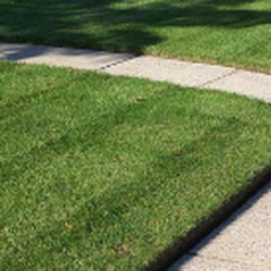 ProCare Lawn Care Landscaping San Antonio TX Phone Number