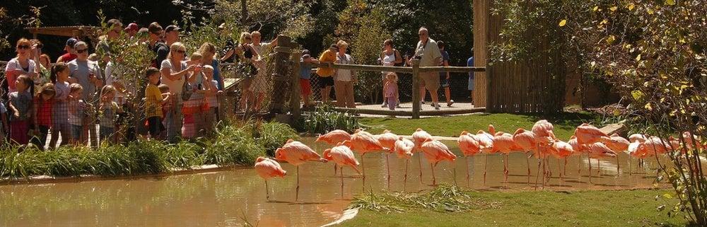 Restaurants Near Grassmere Zoo
