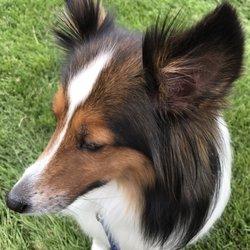 Bark me beautiful 14 reviews pet groomers 1122 francis st photo of bark me beautiful longmont co united states solutioingenieria Choice Image