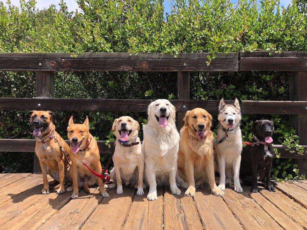 Dog Republic