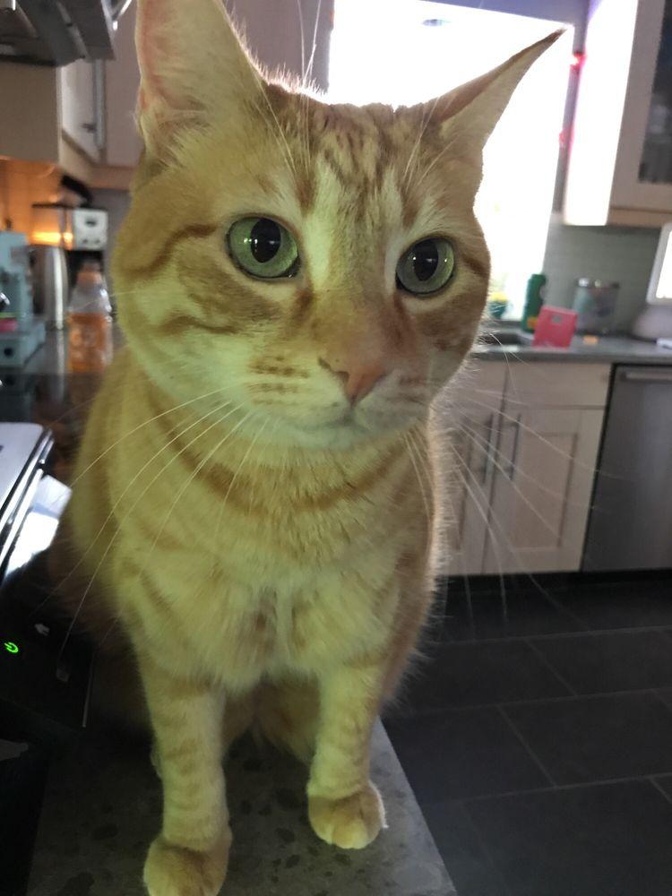 The Cat Behavior Clinic: 93 S Jackson Way, Seattle, WA