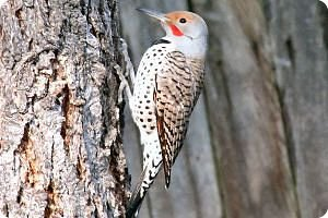 Rocky Mountain Bird and Pest Solutions: Bayfield, CO