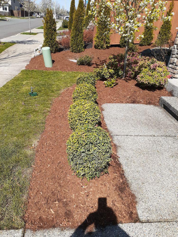 O& E Landscaping Services: Mountlake Terrace, WA