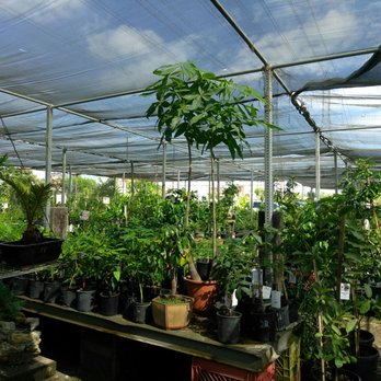 Photo Of Mimosa Nursery Los Angeles Ca United States