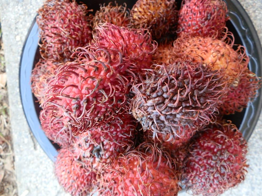 Image result for hairy skin fruit