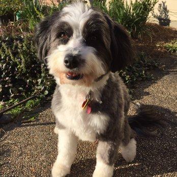 Best Dog Groomer Baton Rouge