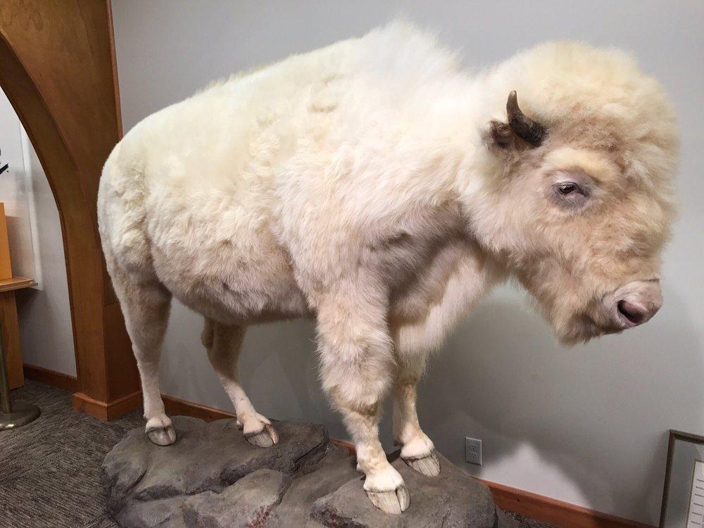 National Buffalo Museum: 500 17th St SE, Jamestown, ND