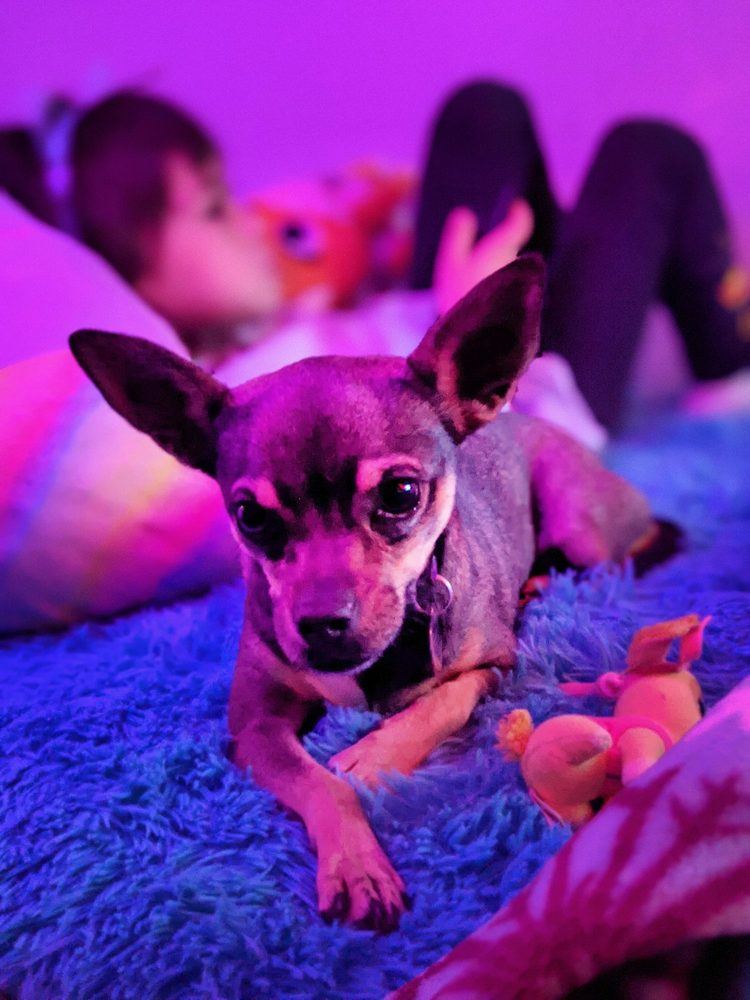 Animal Rescue League of El Paso: 7256 La Junta Dr, Canutillo, TX