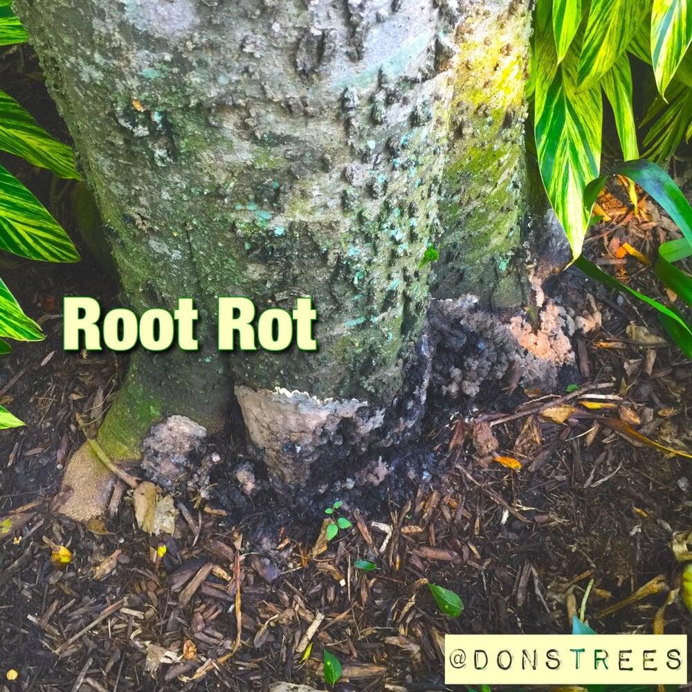 Don's Tree Service: 5806 Maple St, Houston, TX