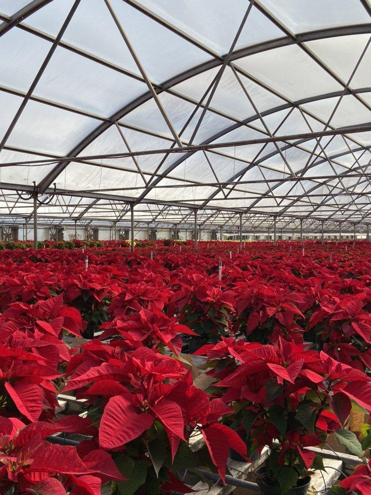 Ivey Gardens: 1318 E Municipal Dr, Lubbock, TX