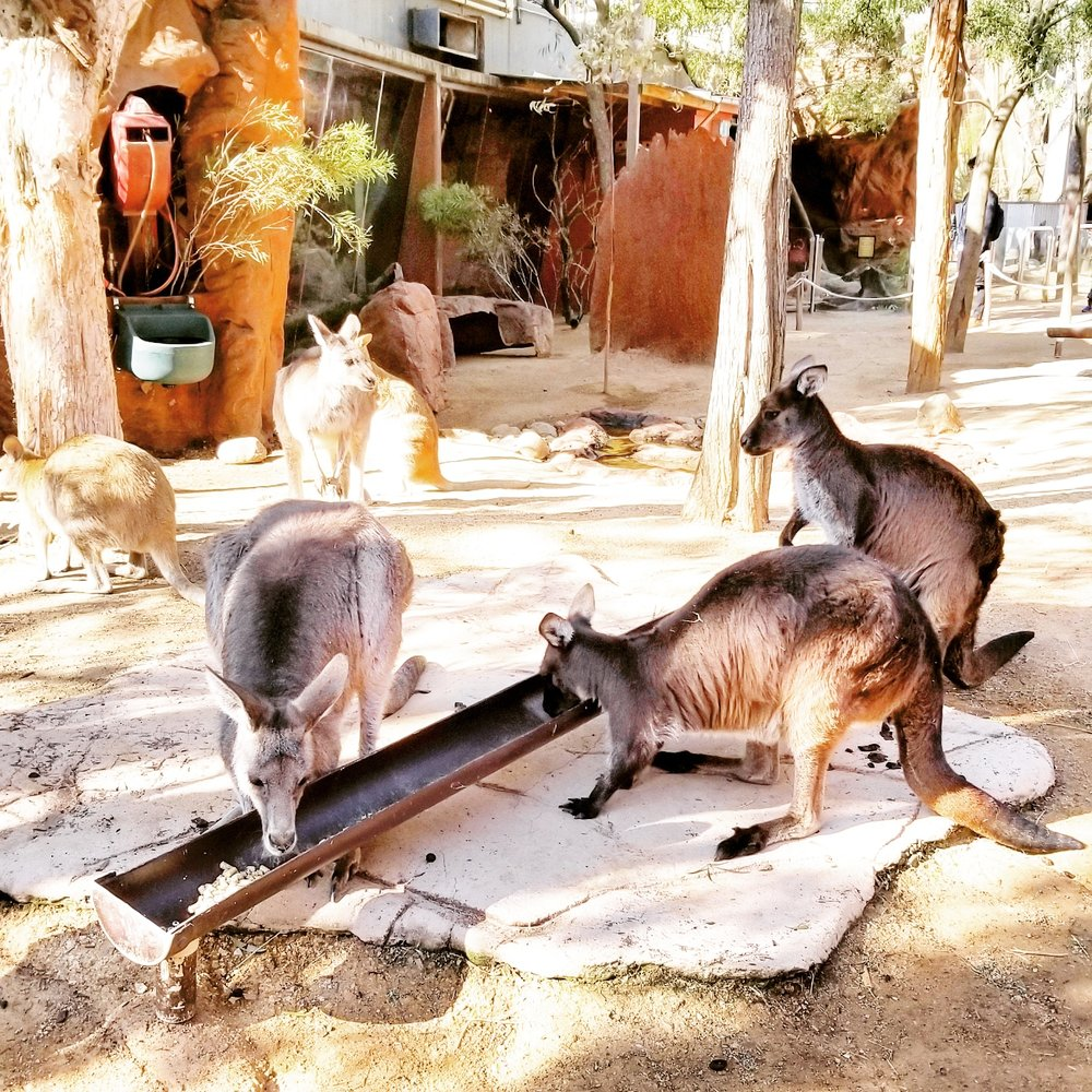 zoos health and wild life Keeping wild animals in zoos, or zoological gardens, is an old practice but today   most big zoos have a full-time staff of animal health professionals, including.