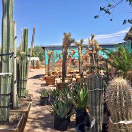 Photos For Cactus Joe S Blue Diamond Nursery Yelp