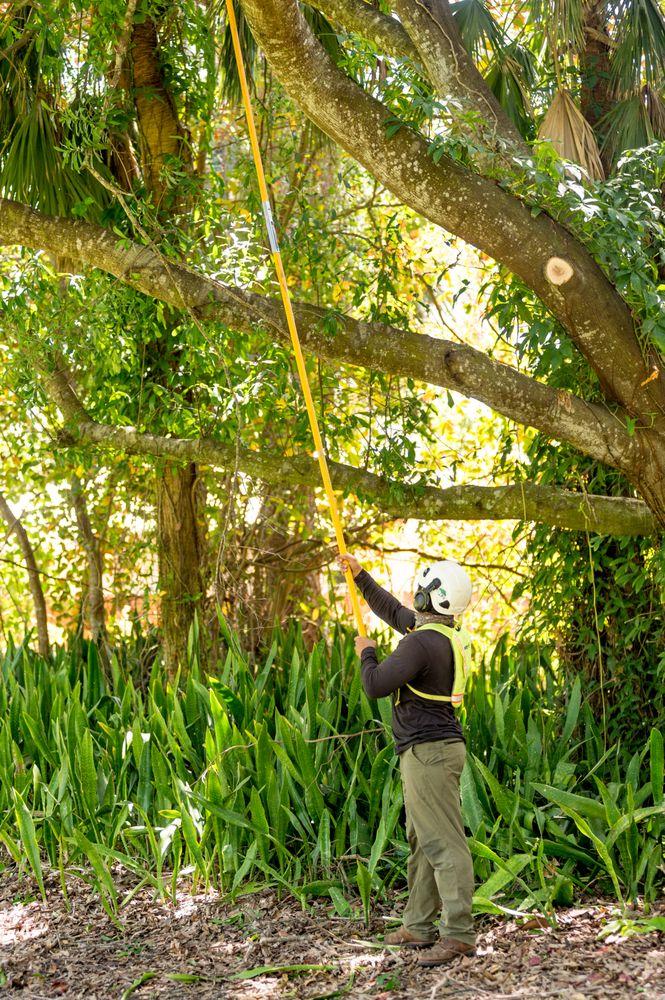 Arborguard Tree Specialists: 111 N Clarendon Ave, Avondale Estates, GA