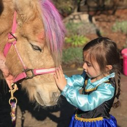 Tickle Me Pony Parties and Traveling Petting Zoo 18 Photos 53