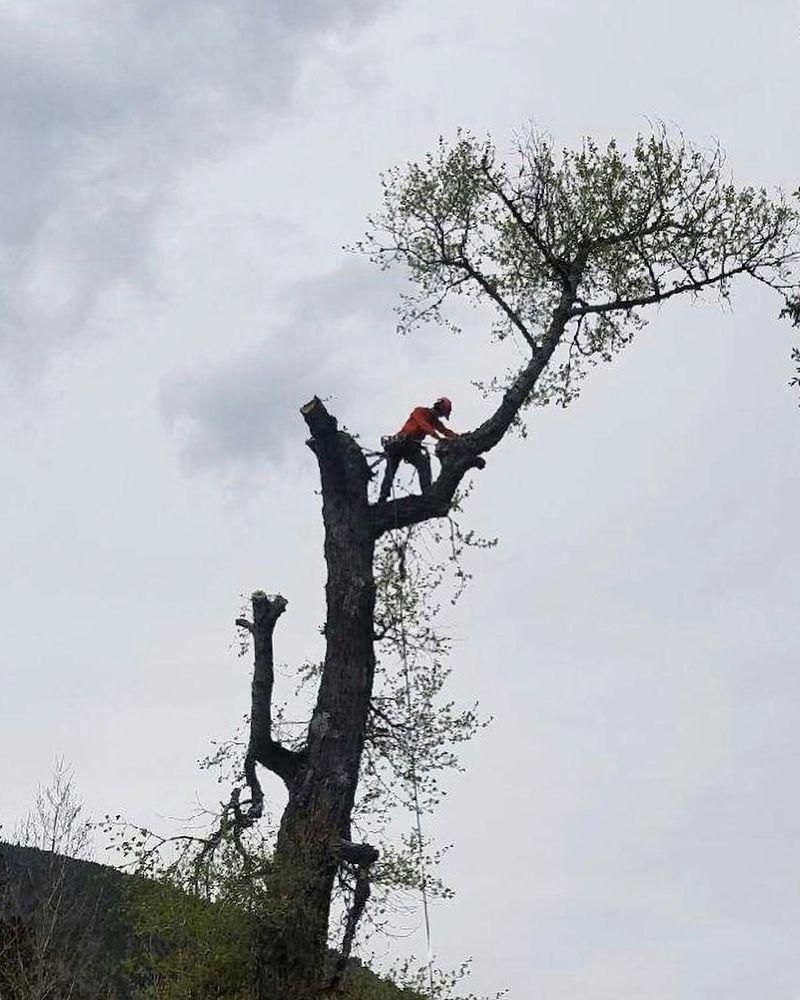 TSH Tree Service: 860 Broken Lance Dr, Breckenridge, CO