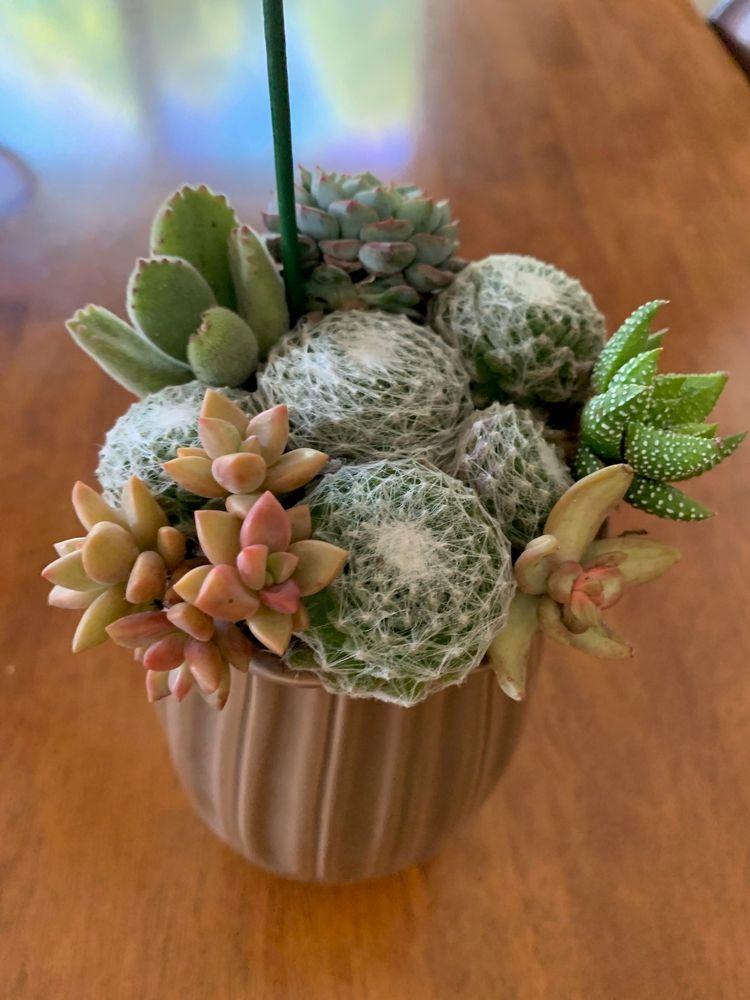 Plants and Paws Nursery: 1008 Mesa Rd, Nipomo, CA