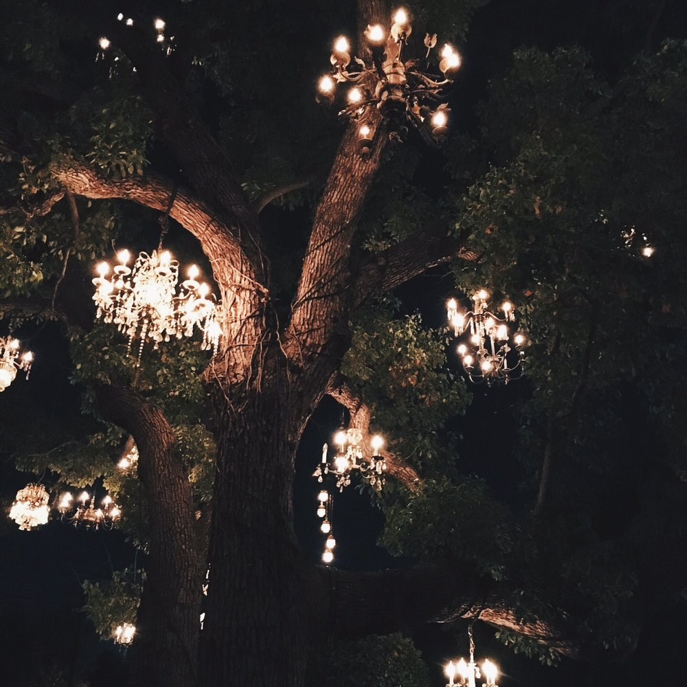 Chandeliers hanging on the tree! So cool! - Yelp