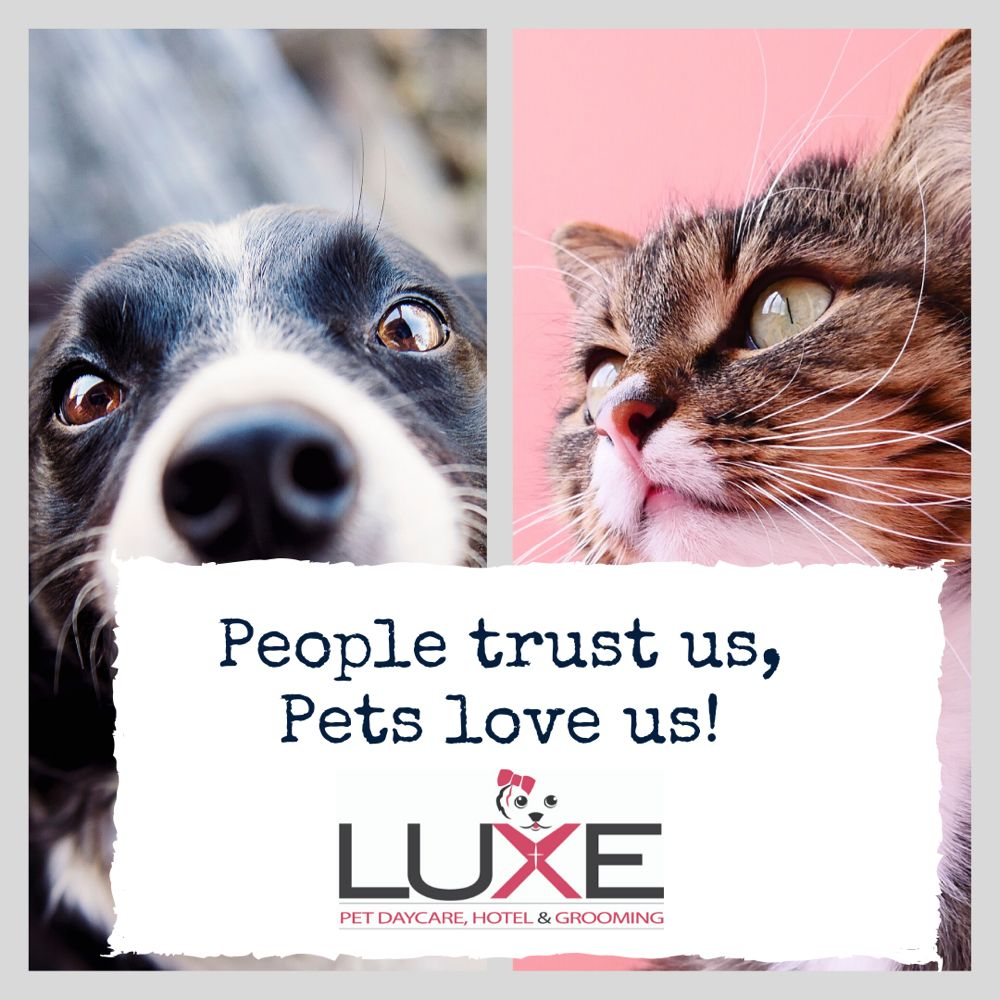 Luxe Pet Daycare Hotel & Grooming