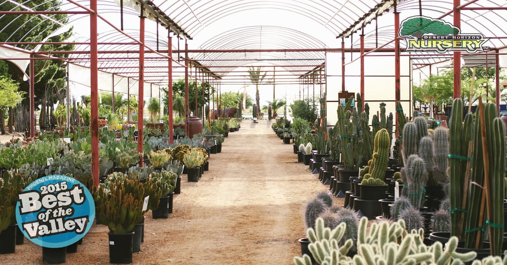 Photo Of Desert Horizon Nursery Queen Creek Az United States