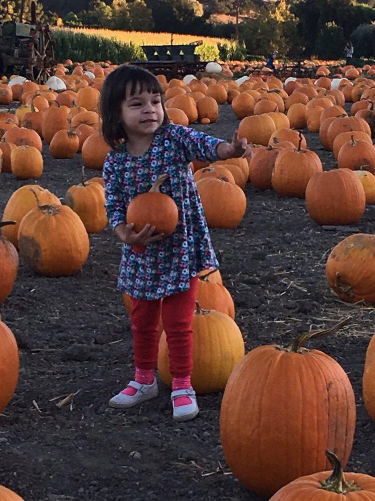 Solvang Farmer Pumpkin Patch: 1000 Alamo Pintado Rd, Solvang, CA