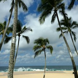 Photo Of Ke Iki Beach Haleiwa Hi United States Palm Trees And