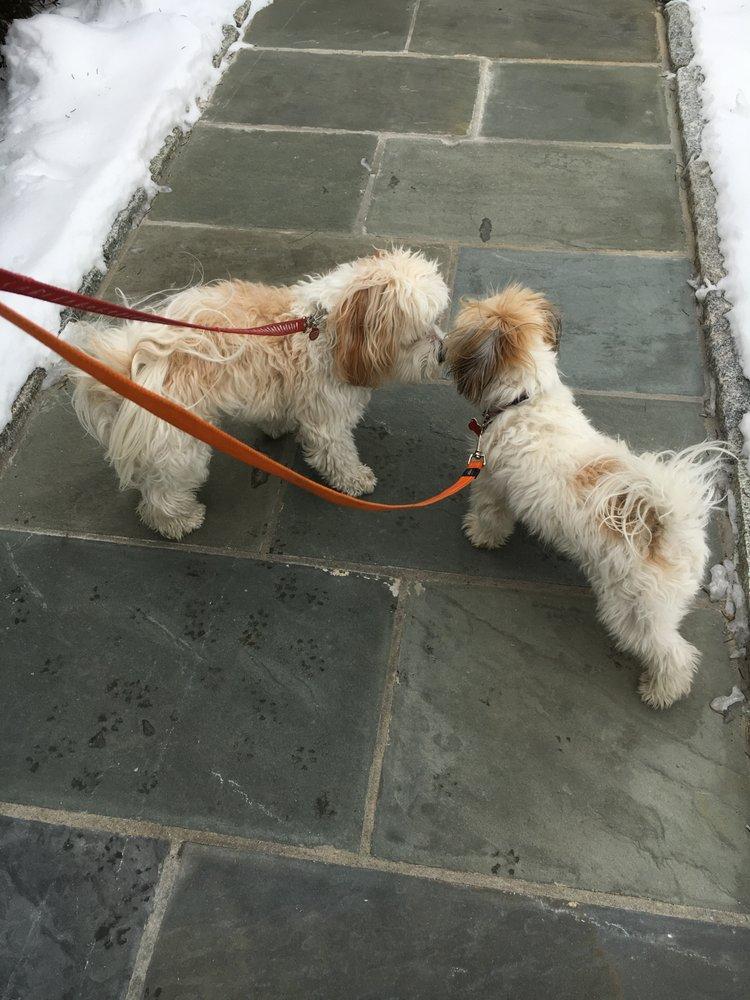 Photos For Bon Chien Pet Concierge Yelp