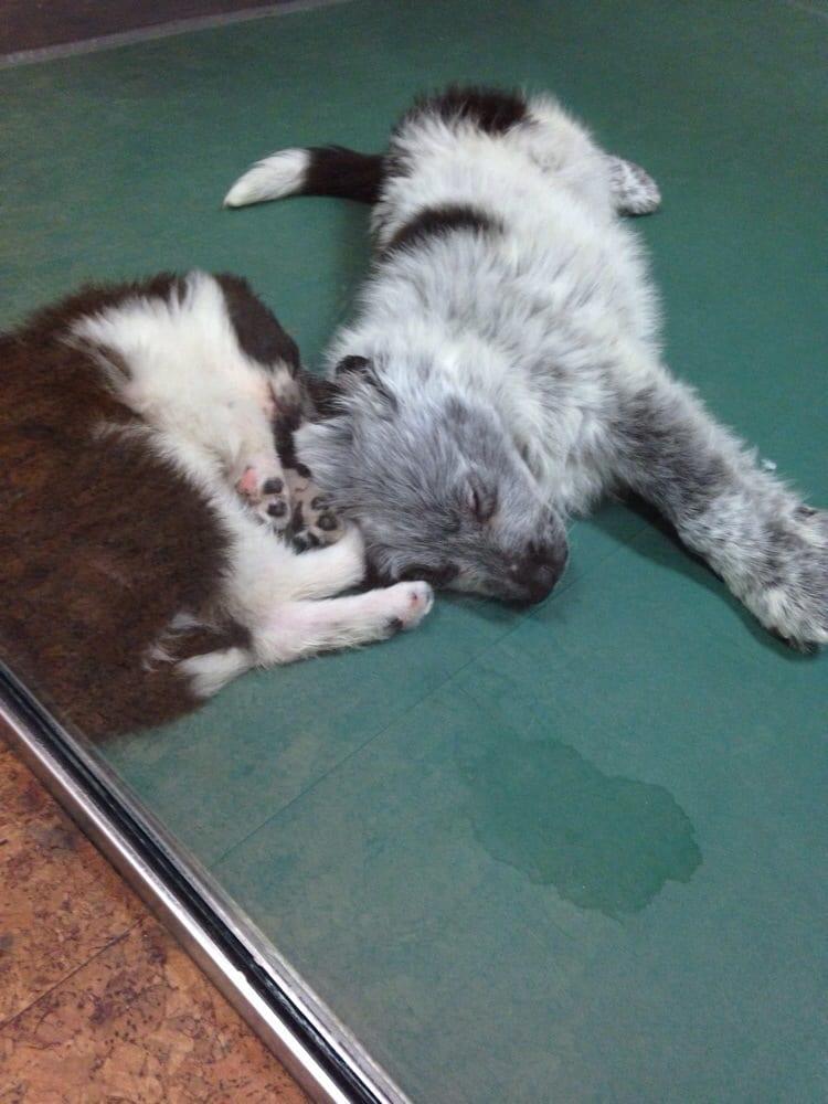 Pooch hotel 52 reviews 56 photos pet boarding pet for Best dog boarding los angeles