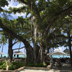 Photo Of The Beach Bar Honolulu Hi United States Banyan Tree In