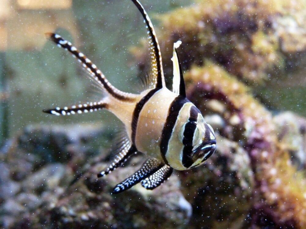 Acquario tropicale animali domestici via eredi farina for Acquario tartarughe e pesci insieme