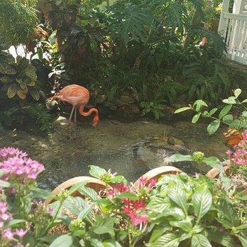 Coupon for butterfly conservatory key west