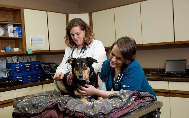 Antigo Veterinary Clinic: 610 Amron Ave, Antigo, WI