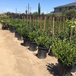 Photo Of U Bonsai Nursery Gardena Ca United States