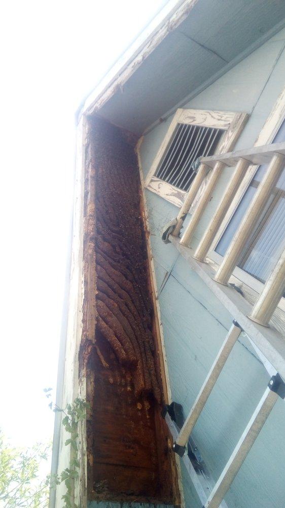 Steve Pankratz Bee Removal: Floresville, TX