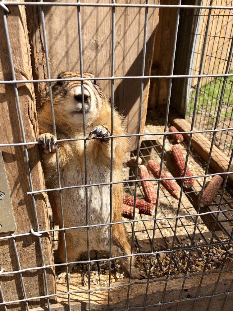 Hochatown Petting Zoo: 9177 US-259 N, Broken Bow, OK