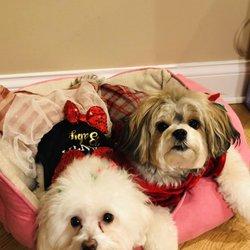 Elmhurst Animal Care Center - 63 Photos & 181 Reviews