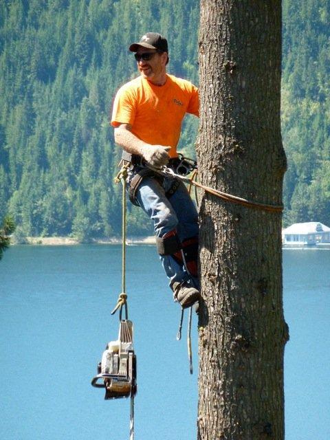 All Seasons Tree Service: 63 N Stevens St, Spokane, WA