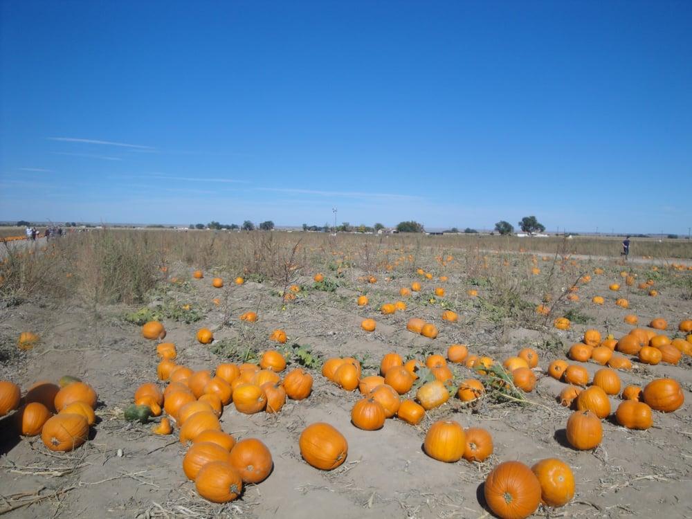 Pantaleo Farms: 39651 South Rd, Vineland, CO