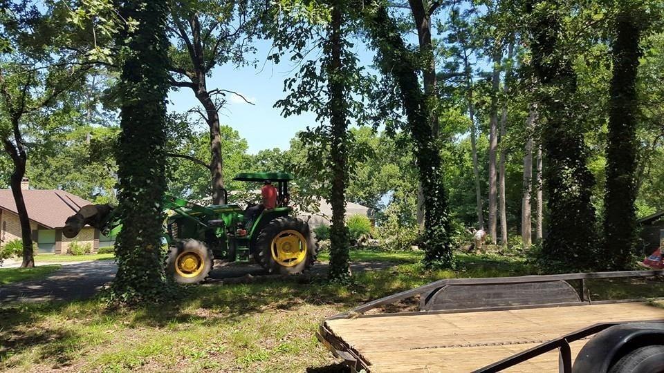Wilmington Tree Service