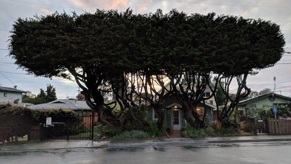 Quality Arbor Care: 310 Kennedy Dr, Capitola, CA
