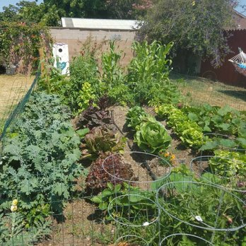 Photo Of Daveu0027s Organic Gardening   Santa Barbara, CA, United States. Our  First